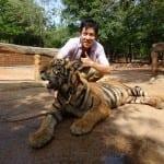タイガーテンプルで虎と2ショットを撮り、ソンブーンで蟹カレー☆